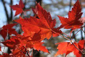 Les activités artistiques pour les tout-petits à l`automne