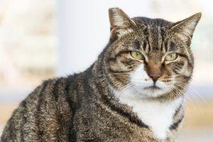 Symptômes cat de tiques