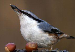 Mangeoires d`oiseaux différents enfants d`âge préscolaire peuvent faire