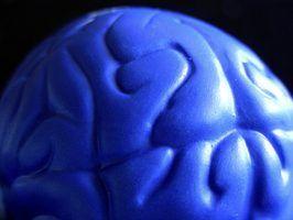 Quatre grandes parties du cerveau