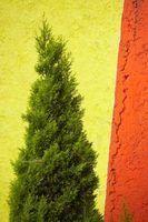 Les couleurs chaudes comme l`orange, ou nuances fraîches de vert, semblent frapper contre un mur jaune.