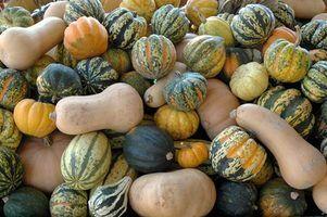 Artisanat gourd pour les enfants