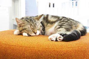 Les remèdes maison pour les chats éternuent