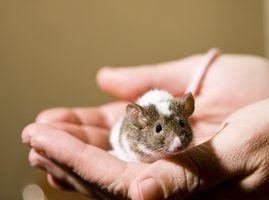 Moyens intéressants pour se débarrasser des souris