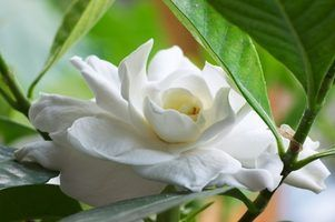 Liste des fleurs chinois