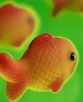 Ocean & créature de mer activités pour les enfants