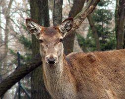 Règlements de chasse de cerfs dans ohio