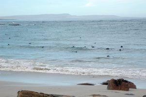 De nombreux degrés de biologie de la faune en ligne sont liés à l`océan ou la vie marine.