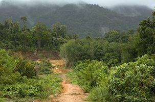 Plantes vénéneuses de l`amazonie