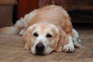 Les signes d`un chien en deuil