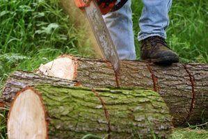 Lois de coupe des arbres dans montana