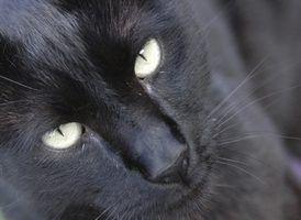 Types de poils de chat
