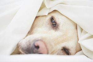 Quelles sont les causes de crises soudaines dans un chien?