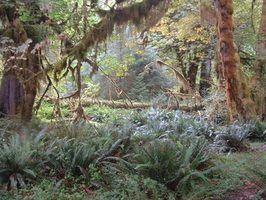Quels types de plantes sont dans la forêt centrale tropicale américaine?