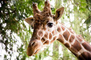 Activités artistiques zoo pour enfants d`âge préscolaire